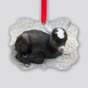 Curled Up Baby Goat Picture Ornament