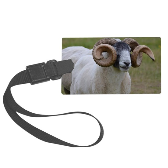 Curled Horn Sheep