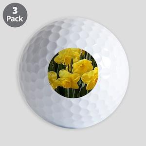 Daffodil flowers in bloom in garden Golf Balls