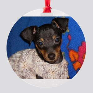 miniature pinscher in sweater Ornament