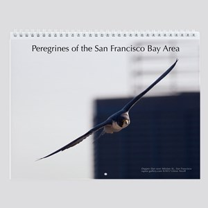 Raptor Calendar #7 - Peregrines of SF Bay Area