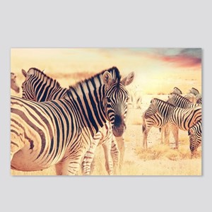 Beautiful Zebras Postcards (Package of 8)