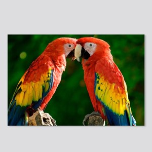 Beautiful Parrots Postcards (Package of 8)
