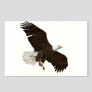 Amazing Bald Eagle Postcards (Package of 8)