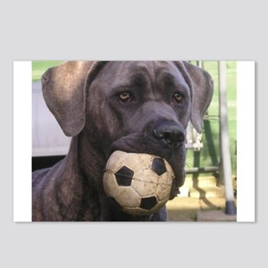 cane corso Postcards (Package of 8)