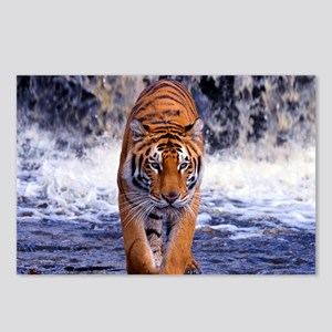 Tiger In Waterfall Postcards (Package of 8)