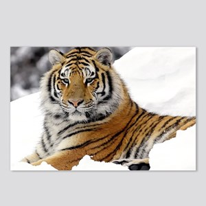 Tiger In Snow Postcards (Package of 8)