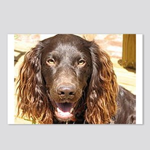 LS boykin spaniel Postcards (Package of 8)