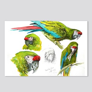 Green Macaw Postcards (Package of 8)