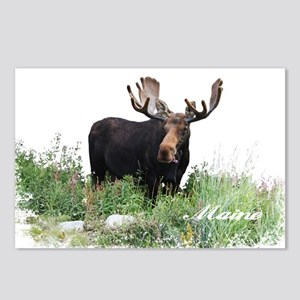 Maine Moose Postcards (Package of 8)