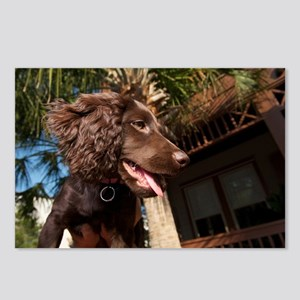 Boykin Spaniel Puppy Postcards (Package of 8)
