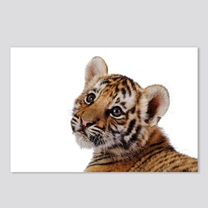 baby tiger Postcards (Package of 8)