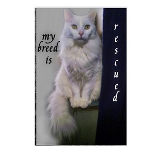 Former Stray Postcards (Package of 8)
