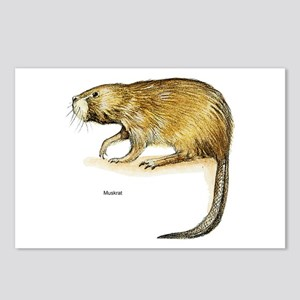Muskrat Rodent Postcards (Package of 8)