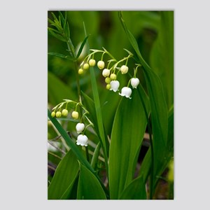 Convallaria majalis (Lily Postcards (Package of 8)