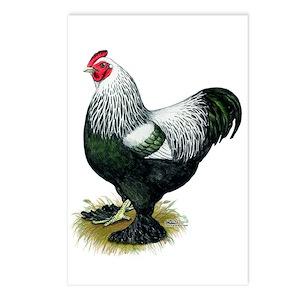 Brahma Dark Rooster Postcards (Package of 8)