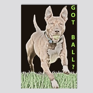 Pit Bull 8 Postcards (Package of 8)