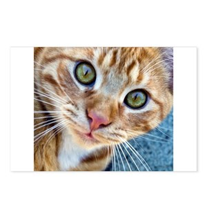 Crazy Kitty Postcards (Package of 8)