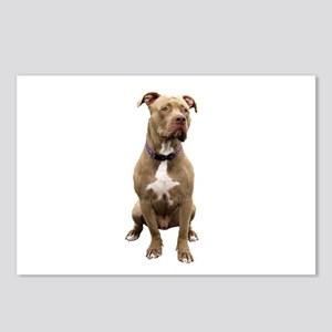 Pit Bull #1 (bw) Postcards (Package of 8)