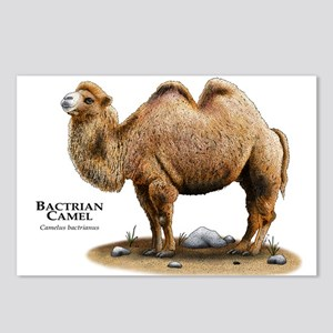 Camel Drawing Postcards - CafePress