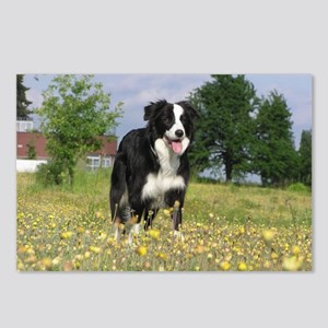 full 3 border collie Postcards (Package of 8)