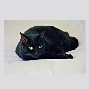 Black Cat! Postcards (Package of 8)