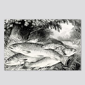 American brook trout - 1872 Postcards (Package of