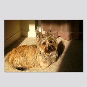 cairn terrier laying Postcards (Package of 8)