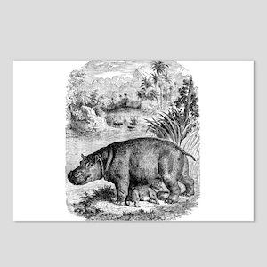 Vintage Hippopotamus Baby Postcards (Package of 8)