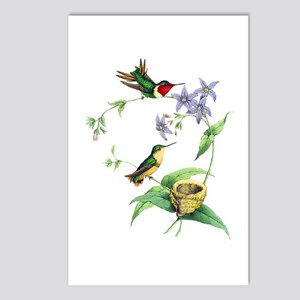 Hummingbirds Postcards (Package of 8)