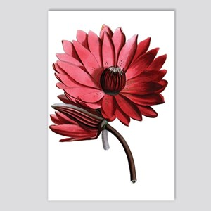 Red Water Lilies Postcards (Package of 8)