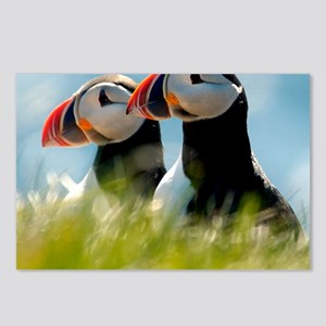 Puffin Pair 14x14 600 dpi Postcards (Package of 8)
