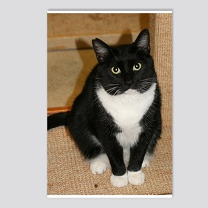 Cat Photo Postcards (Package of 8)