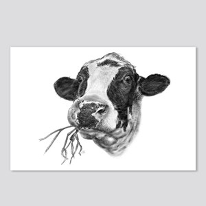 Happy Holstein Friesian Dairy Cow Postcards (Packa