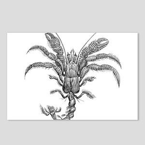 Vintage Hermit Crab Marin Postcards (Package of 8)