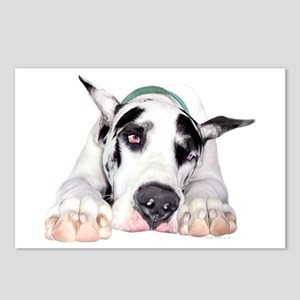 Great Dane Shy Harlequin Postcards (Package of 8)