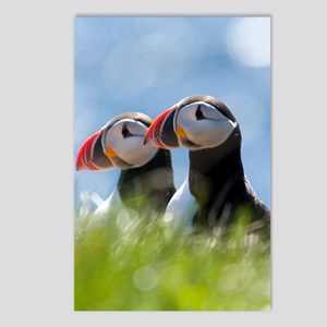 Puffin Pair 7.355x9.45 Postcards (Package of 8)