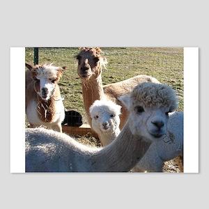 ALPACA FAMILY PORTRAIT™ Postcards (Package of 8)