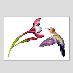 Hummingbird in flight Postcards (Package of 8)