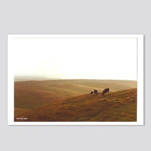 Point Reyes dairy pasture Postcards (Package of 8)