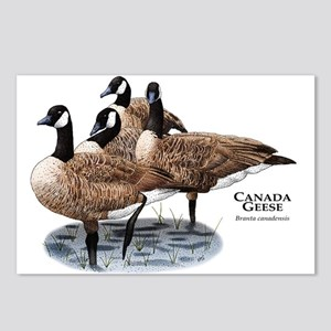 Canada Geese Postcards (Package of 8)