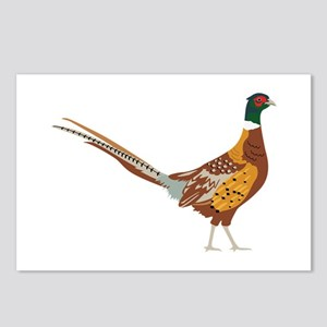 Ring-Necked Pheasant Postcards (Package of 8)
