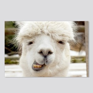 Funny Alpaca Smile Postcards (Package of 8)