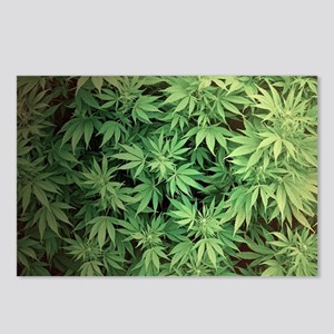 Marajuana Weed Pot Postcards (Package of 8)