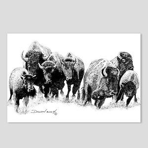 Buffalo Herd Postcards (Package of 8)