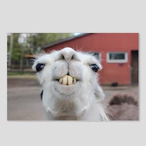 Funny Alpaca Llama Smile Postcards (package Of 8)