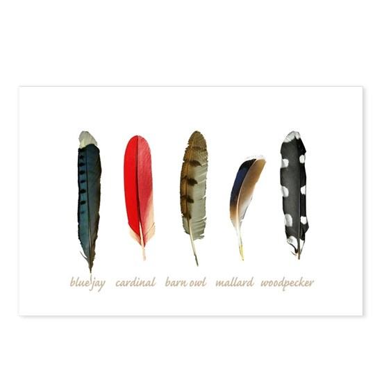 Nature Art Bird Feathers