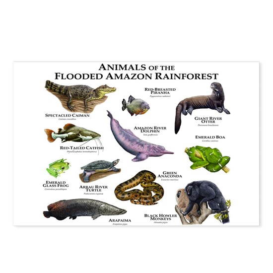8516c981148e6 Animals of the Flooded Amazon Rainforest Postcards by Wildlife Arts2 -  CafePress