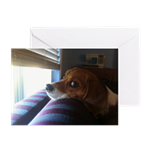 Beagle at the window greeting cards