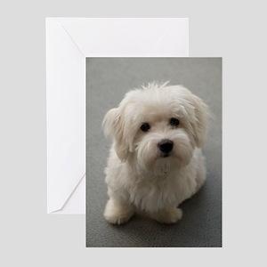 coton de tulear puppy Greeting Cards